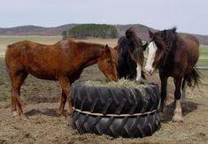 DIY safe tractor tire hay feeder DIY safe tractor tire hay feeder - Art Of Equitation Horse Shelter, Horse Stables, Horse Barns, Hay Feeder For Horses, Horse Feeder, Farm Animals, Animals And Pets, Tractor Tire, The Barnyard