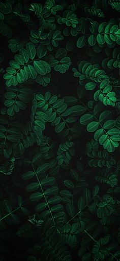 Leaves - My best wallpaper list Wallpapers Android, Hd Wallpaper Für Iphone, Plant Wallpaper, Tropical Wallpaper, Phone Screen Wallpaper, Green Wallpaper, Cute Wallpaper Backgrounds, Aesthetic Iphone Wallpaper, Nature Wallpaper