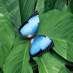 le club de la nature: La chenille au papillon