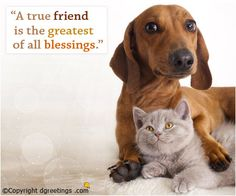 Bond between true friends is the strongest!