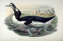 Pingouin — Wikipédia