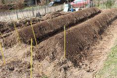 Aquaponics System For You Permaculture Design, Design Jardin, Garden Design, Fruit Garden, Vegetable Garden, Potager Bio, Potager Garden, Garden Insects, Healthy Environment