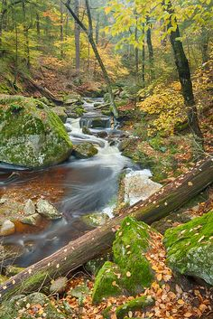 Enders State Forest ~ New England