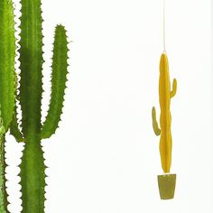 Natalie Joy's brass house plant mobile is almost balletic, a marvel of balance and kinetic grace. Plus you never have to water them. Just hang in a warm, dry environment and watch them turn and glint in the light. Fab Life, Cactus Plants, Cacti, Live For Yourself, House Plants, Vines, Inspiration, Joy, Environment