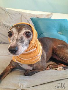 DIY small dog snood/infinity scarf tutorial (no sew) @diyshowoff #italiangreyhound #diy #pets