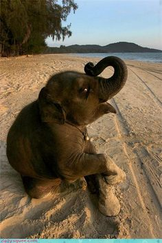 Neephant at the Beach!  This photo is so adorable, it is frameworthy.  I just may do that.  =o)