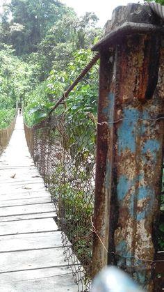 Puente colgante, sarapiqui