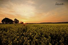 Sascha D. Felder, Vineyard, Celestial, Sunset, Photography, Outdoor, Scenery Photography, Outdoors, Sunsets