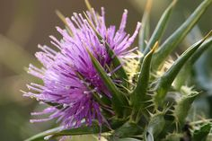HolyThistle / http://www.scratchmommy.com/you-would-be-blessed-to-have-this-in-your-gardens/