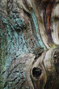 - #cortecce #tronchi #alberi #natura