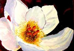 'White Peony' Fine Art Water color Painting by Louise Grant