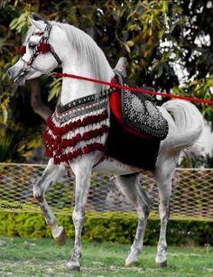 Cute Wild Animals, Animals And Pets, Horse Costumes, Arabian Costumes, Nature Story, Beautiful Arabian Horses, Equine Photography, Horse Breeds, Horse Art