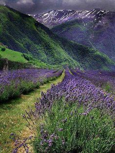Purple Fields--Fairy Tales by Nature Lavender Blue, Lavender Fields, Lavender Flowers, Beautiful Flowers, Beautiful Places, Beautiful Pictures, Growing Lavender, Valensole, Shades Of Purple