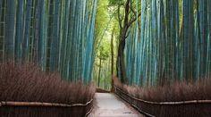 Segano Bamboo Forest, Kyoto, Japan