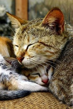 One of the most heartwarming things to see is a mother cat caressing and feeding her little ones.