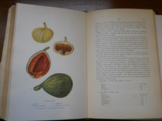From: Foods and their Adulteration... (1907) by Harvey W. Wiley