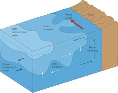 Plankton and Sea Currents - Yahoo Image Search Results