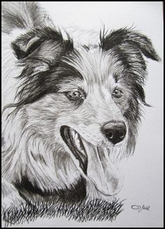 Charcoal border collie custom portrait