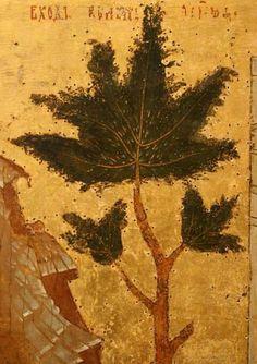 Botanical Plant Illustrations