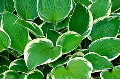 10 flerårige planter der pynter i din have og er umulige at slå ihjel Natural Life, Perennials, Pergola, Plant Leaves, Flora, Nature, Outdoor, Beautiful, Gardening