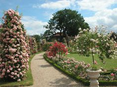 Image: http://www.gardenvisit.com/uploads/image/image/169/16939/roseraie_de_lhay_les_roses_2730_jpg_original.jpg