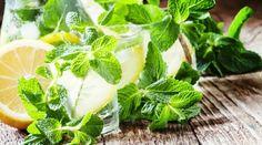 Léčivé oregano - kde ho sbírat a jak pěstovat + 5 domácích receptů Korn, Parsley, Pesto, Cantaloupe, Spinach, Cabbage, Herbs, Fruit, Vegetables