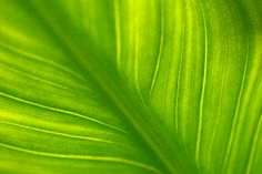 Imagine that green greener than green.....