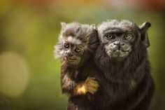 Proud to be... by Manuela Kulpa on 500px