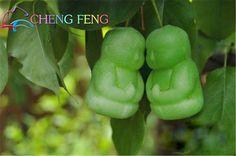Bebê Ginseng Frutas Sementes de Pêra vaso de Bonsai diy planta Ornamental Erva Rara Sementes para casa Jardim Planta a semente Da Árvore 20 pçs/saco em Bonsia de Home & Garden no AliExpress.com | Alibaba Group