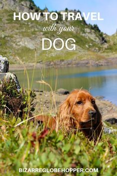 How to travel with your dog: tips and tricks for traveling dog owners. How to pick dog-friendly destinations, hikes, and activities and what to pack for your pooch. Pet Travel, Solo Travel, Family Travel, Group Travel, Asia Travel, Packing Tips For Travel, Travel Advice, Travel Guides, Travel Hacks