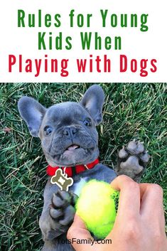 TOTS Family, Parenting, Kids, Food, Crafts, DIY and Travel 5-Ground-Rules-for-Young-Kids-When-Playing-with-Dogs 5 Ground Rules for Young Kids When Playing with Dogs Kids Parenting Pets TOTS Family Uncategorized new pet Getting a Pet First Pet dogs dog training dog Kids House Rules, Rules For Kids, House Ideas, Fine Motor Activities For Kids, Preschool Activities, Natural Parenting, Good Parenting, Dogs And Kids, Animals For Kids