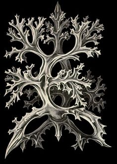 Ernst Haeckel Nature Illustration, Botanical Illustration, Ernst Haeckel Art, Natural Form Art, Nature Drawing, Patterns In Nature, Science Art, Botanical Prints, Beautiful Paintings