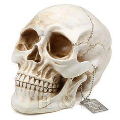 Life Size Replica Realistic Human Skull Gothic Halloween decoration Ornament…