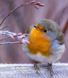 Ideas Robin Bird Friends For 2019 Cute Birds, Pretty Birds, Beautiful Birds, Animals Beautiful, Nature Animals, Animals And Pets, Cute Animals, Bird Pictures, Animal Pictures