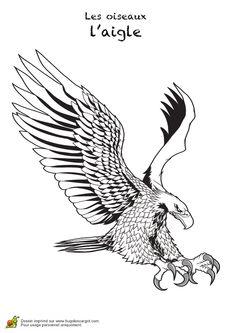 Dessin d'un aigle en pleine attaque à colorier