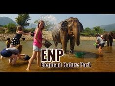 Elephant Nature Park Rescue and Rehabilitation Center in Chiang Mai Province, Thailand