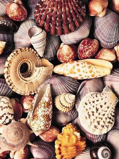 Shells.... when i was a kid i spent lots of time with my parents boating out the channel at the coast and walking beaches in isolated areas picking up shells... best memories