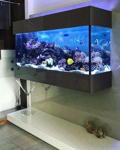 Wall Aquarium, Saltwater Aquarium Fish, Aquarium Design, Unique Fish Tanks, Cool Fish Tanks, Fish Tank Design, Natural Architecture, Amazing Aquariums, Living Room Partition Design
