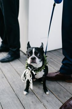 Ring bearer dog: http://www.stylemepretty.com/canada-weddings/ontario/toronto/2014/10/14/boho-chic-toronto-wedding-at-the-thompson-hotel/ | Photography: Celine Kim - http://celinekimphotography.com/