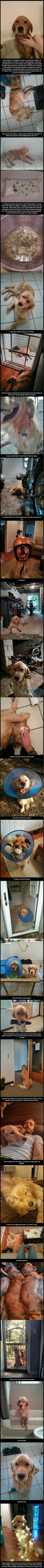 The heartwarming story of Bran the dog's life. happy ending. rescue pet.  golden