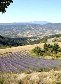 Le Parc des Baronnies Provençales : un #champ de #lavande