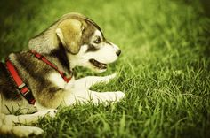 5 Ways To Use Apple Cider Vinegar For Dogs. (Puppy _ 3, Stock Photo By dimitri_c)