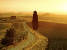 Lonely road in Tuscany