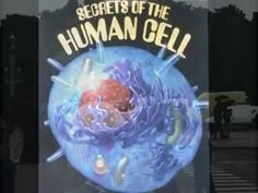 The Biology of Belief! ¨By Bruce Lipton Phd¨ This video empowered me to be careful of the thoughts I send to my biology (Body). The human cell is the most be...