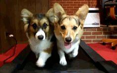 dogs on a treadmill