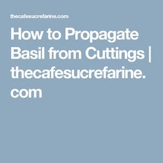 How to Propagate Basil from Cuttings | thecafesucrefarine.com