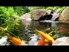 York, Lancaster, Harrisburg PA Backyard Koi Fish Ponds, Waterfalls, and Fountains - YouTube