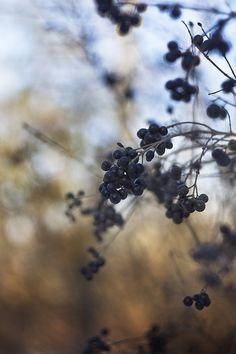 Wild Berry Woods