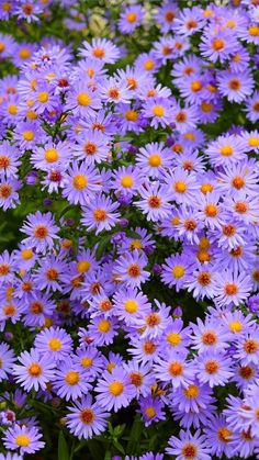 Purple flowers, meadow, flora, nature, wallpaper - Best of Wallpapers for Andriod and ios Purple Flowers Wallpaper, Flower Iphone Wallpaper, Sunflower Wallpaper, Beautiful Flowers Wallpapers, Beautiful Nature Wallpaper, Cute Wallpaper Backgrounds, Flower Backgrounds, Apple Wallpaper, Plain Wallpaper