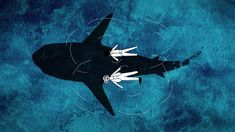 nice That One Time: Surviving a Perilous Swim w/ Sharks (Animated Short)